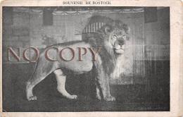 Souvenir De Bostock - Lion Cirque - Circo