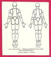 Régions Postérieures Du Corps Dans Les Deux Sexes  Larousse Médical Illustré 1929 - Vieux Papiers