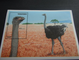Tanzania-Birds - Birds