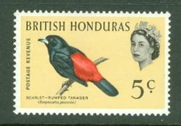 British Honduras: 1962   QE II - Birds   SG206    5c    MH - Honduras Britannique (...-1970)