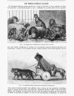 UNE TROUPE D'ANIMAUX SAUVAGES Menagerie De M. CARL HAGENBECK  à LONDRES  1891 - Animaux