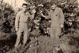 Photo Originale Guerre D'Algérie (1954-62) Soldats, Képis, Calot Et Orangers - War, Military