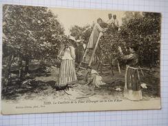 CPA - LA CUEILLETTE DE LA FLEUR D'ORANGER SUR LA COTE D'AZUR -  ANIMEE - R478 - Cultivation