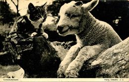 CATS - SCANDALMONGERS - JARROLD  C340 - Cats