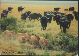 °°° GF237 - TANZANIA - BUFFALOS CHASING LIONS IN NGORONGORO CRATER - 2005 With Stamps °°° - Tanzania