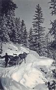 Holztransport Mit Pferd - Agriculture