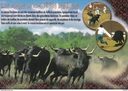 40---LA COURSE LANDAISE--les Vaches Ou Vachettes Landaises--voir 2 Scans - France