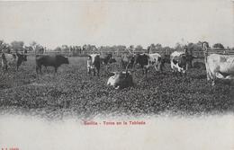 SEVILLA → Toros En La Tablada, Union Postal Universal Ca.1900 - Sevilla