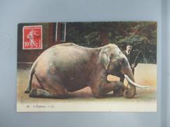 CPA ELEPHANT DOMPTEUR - Elefantes