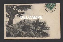 DF / ALGERIE / MICHELET / CÈDRES DU DJURDJURA - SOMMET DE L'AZERON N'TOHER / CHASSEUR / ANIMÉE / CIRCULÉE EN 1911 - Algeria
