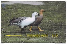 Falkland Islands,  FLK339B, Upland Geese, 2 Scans.   339CFKB. - Falkland Islands
