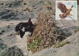 PORTUGAL 1980 Max Card With Bird Of Prey. - Adler & Greifvögel