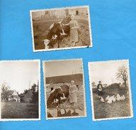 2223 - Mûr De Bretagne - Côte Du Nord - Une Ferme - Poule Vache - 4 Photos - Orte