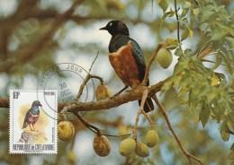 Côte D'Ivoire - Carte Maximum 1980 - Merle - (Glossy Starling) - Costa D'Avorio (1960-...)