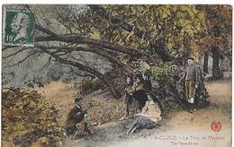 92 - SAINT CLOUD -  Le Trou De Madame - Saint Cloud