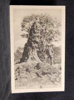 Rhodesia Termithög__(17116) - Simbabwe
