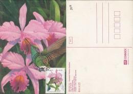 PMAV014 - Maximum Card/Carte Maximum: White-vented Violetear (Colibri Serrirostris)