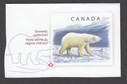 Canada, Ours Polaire, Polar Bear - Arctic Tierwelt