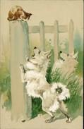 AK Hund, Chien, Dog, Spitz Verbellt Katze, Loulou, Prägelitho, Gauffrée, O 1903 (4676) - Hunde