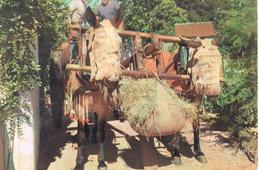 Attelage De Mules Dans Les Landes De Gascogne . - Chevaux