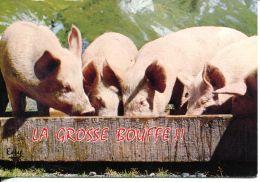 N°53605 -cpsm Cochons -la Grosse Bouffe- - Cochons