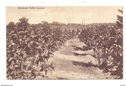 KAFFEE / Koffie / Coffee / Cafe / Caffe - Plantage In Sumatra, 1912 - Sonstige