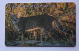 African Wild Cat Animal , Namibia - Namibia