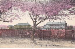 26199 JAPON JAPAN YOKOHAMA Park -cherry Blossom -cerisier En Fleurs -TBE Colorisée