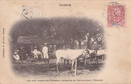 26209 VIET NAM - TONKIN - Manoeuvres -chasseurs Annamites Au Cantonnement -chevaux -1150 Moreau -10c Timbre - Viêt-Nam