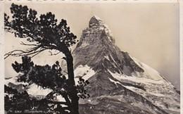 Switzerland Matterhorn Und Arwe 1942 Photo - VS Valais