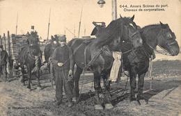 Antwerpen  Anvers  Chevaux De Corporations Boerenpaarden Werkpaarden Jagen Paard Paarden     X 1605 - Antwerpen