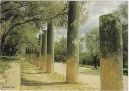 Cartolina - Postcard  - ISRAELE - SEBASTIA,STREET OF COLUMNS - Israele