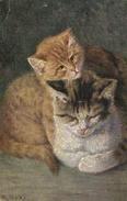 Cats, M. Stocks, Two Cute Cats, Old Postcard - Katten