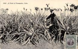 CUBA / A Field Of Pineapples - Cuba