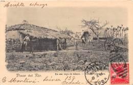 CUBA / Pinar Del Rio - En Una Vega De Tabaco - Cuba