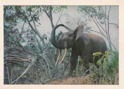 VERS 1950 FAUNE ET FLORE AQUATIC / PUBLICITE COTE D'OR / ELEPHANT S'ARROSANT DE POUSSIERE - Éléphants