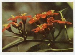 FLOWER - AK298769 Leucht-Wolfsmilch - Blumen
