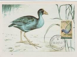 Burundi - Carte Maximum - Oiseau (Oiseaux - Bird - Birds) - Burundi