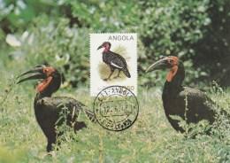 Angola - Carte Maximum - Oiseau (Oiseaux - Bird - Birds) - Angola