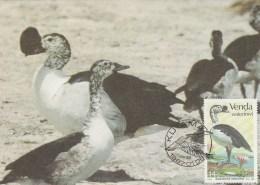 Venda - Carte Maximum - Oiseau (Oiseaux - Bird - Birds) - Oiseaux