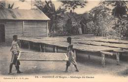 GABON / Ogooué - Séchage Du Cacao - Gabon