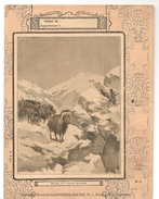 Couverture De Cahier Chasse Aux Boeufs Musqués Editions Librairie Papeterie CHARPENTIER ETIENNE - Protège-cahiers