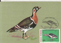 59476- RED BREASTED GOOSE, BIRDS, MAXIMUM CARD, 1983, ROMANIA