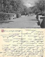 Sud America Chile - Arica - Parque ANIMADO Año 1911 (A-L 482) - Chile