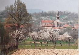 CPM 38 - Saint Jean De Moirans - Cerisiers En Fleurs - Zonder Classificatie