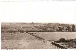 Kieldrecht - Oud-Arenbergpolder - Nieuwstaat - Echte Foto - Uitgave Drukkerij G. Deckers Te Kieldrecht - Beveren-Waas