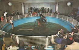 Brighton Aquarium Sussex England The Sea Lion Pool - Royaume-Uni
