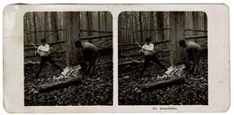 Photo Stéréo 1906 - Bûcherons Dans La Forêt, Abattage D'un Arbre - Neue Photographische Gesenschaft, Steglitz Berlin - Stereoscopic