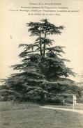ARBRE(CEDRE) MALMAISON - Trees