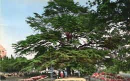 ARBRE(CEDRE) RENNES - Trees